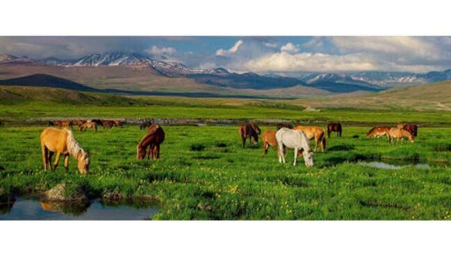 most beautiful places in pakistan Deosai Plains National Park