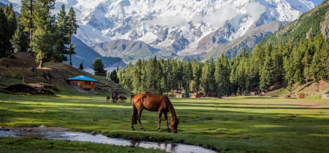 most beautiful places in pakistan Fairy Meadows